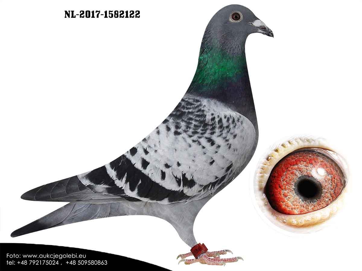 NL17-1582122