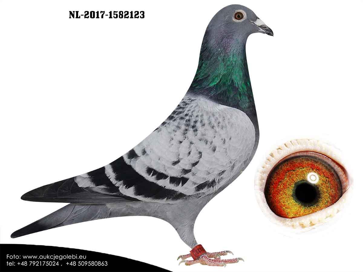 NL17-1582123