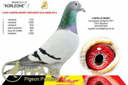 capelle_be12-9067214